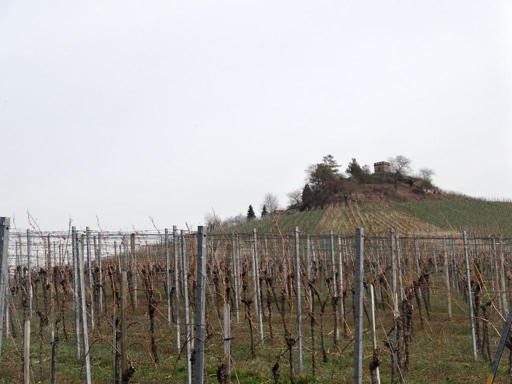 Blickfang in den Stettener Weinbergen: die Y-Burg