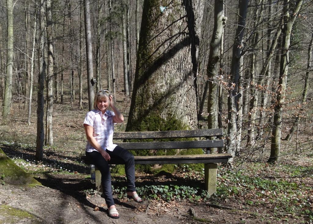 Nach Gundelsbach geht es in den noch lichten Wald