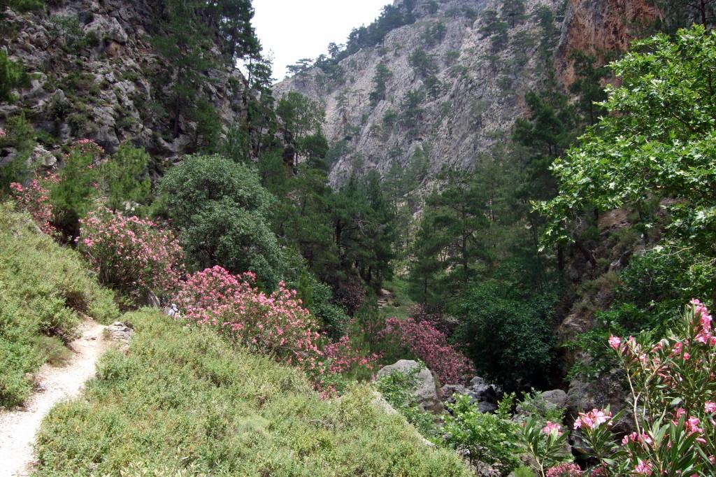 Bei der Hitze sind die Schluchten Kretas besonders attraktiv: Sie bieten Schatten.