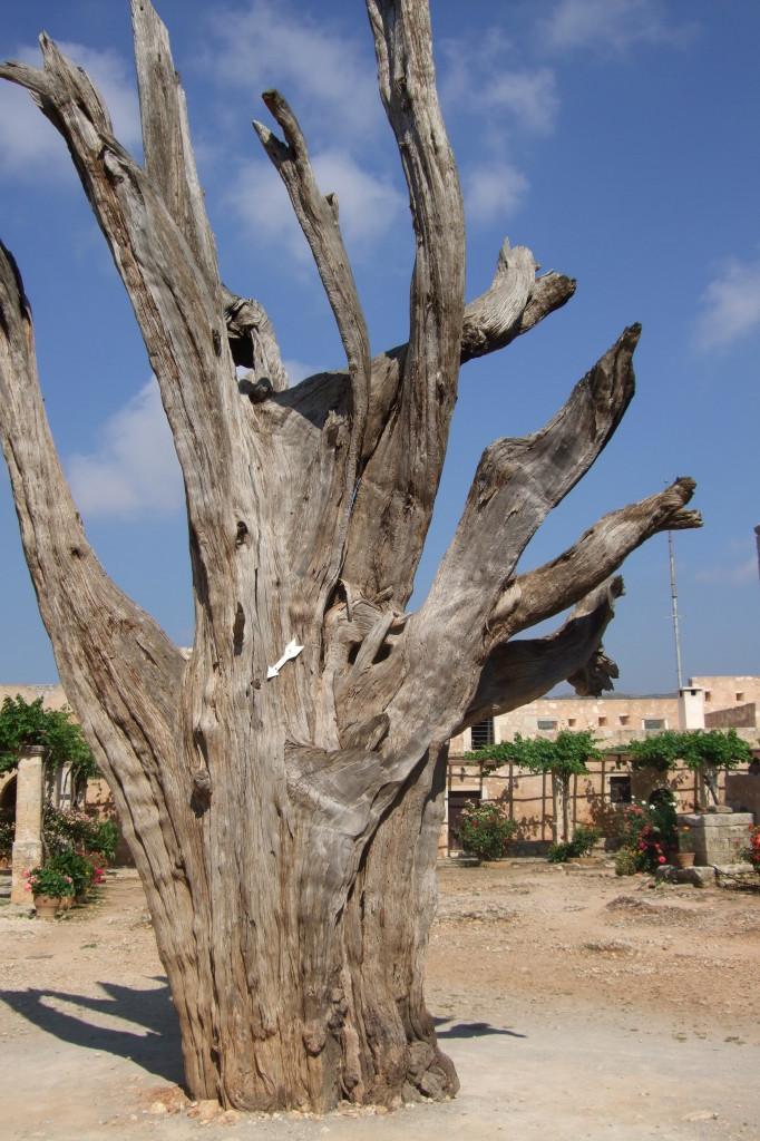 Der verbrannte Baum zeugt von den Ereignissen am 9. November 1866