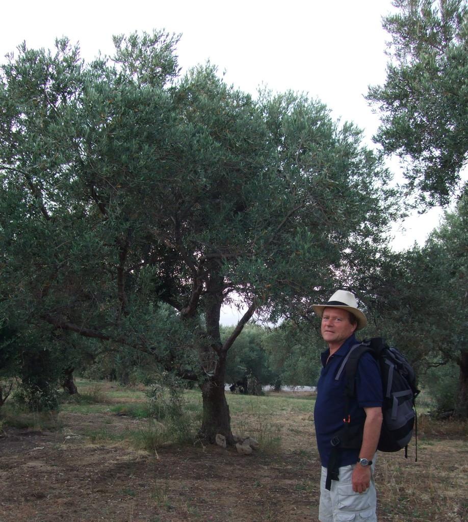 Auf dem Weg zurück nach Rethymno queren wir Oliven-Haine