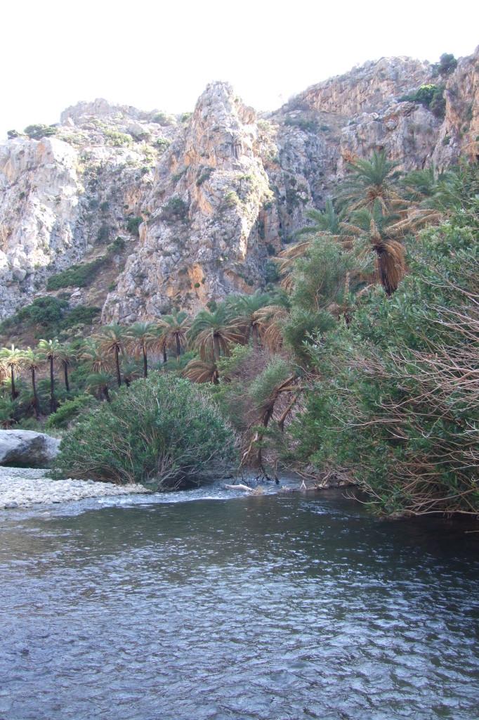 Die Stämme vieler Palmen sind schwarz, Spuren des Feuers von 2010