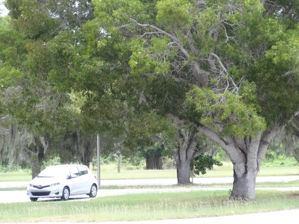 everglades nationalpark florida4 lisa unterwegs. Black Bedroom Furniture Sets. Home Design Ideas