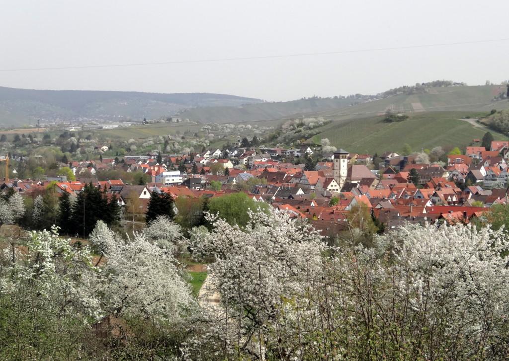 Stetten, zwei Wochen später. Heute am 3. April stehen die Kirschen in schönster Blüte