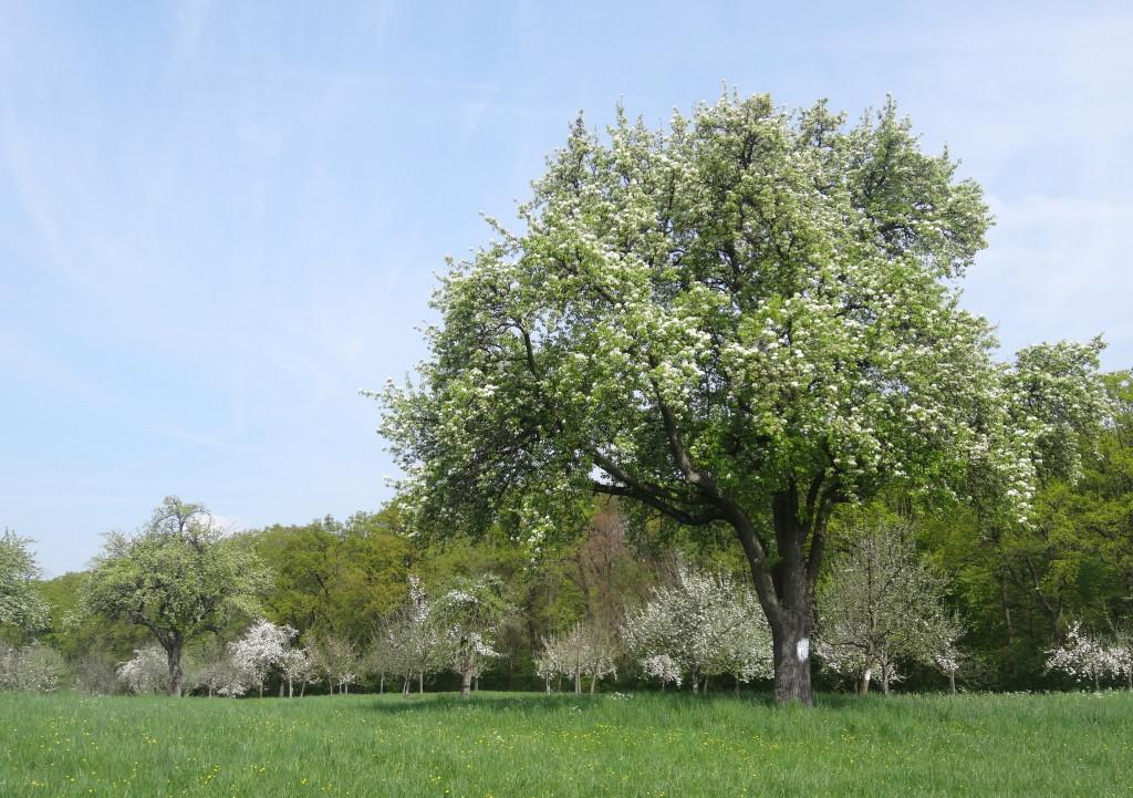 Naturschutzgebiet Greutterwald bei Weilimdorf