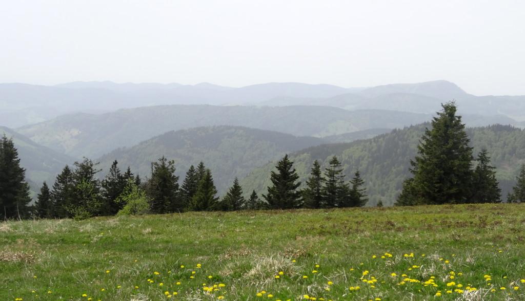 Panorama vom Feldberg
