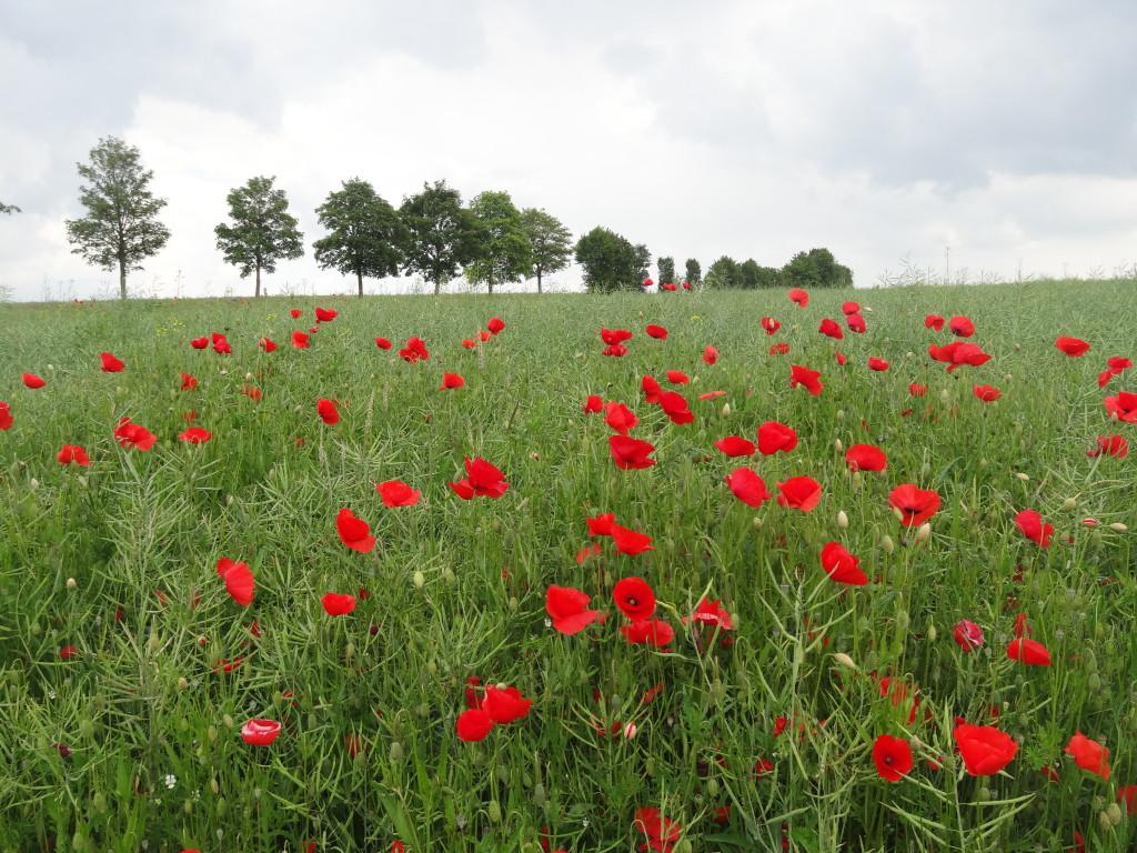 Felder und Wiesen zwischen Herrenberg und Nagold