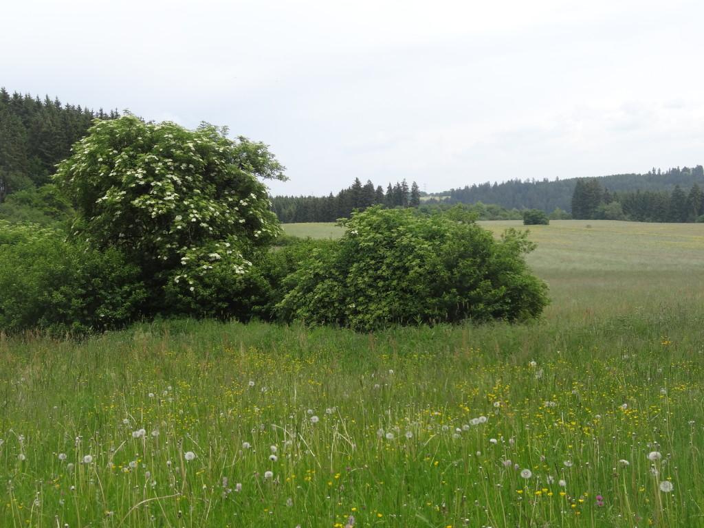 Brigach-Tal