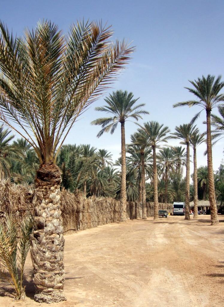 Sogar einen Campingplatz gibt´s, direkt in den Palmengärten