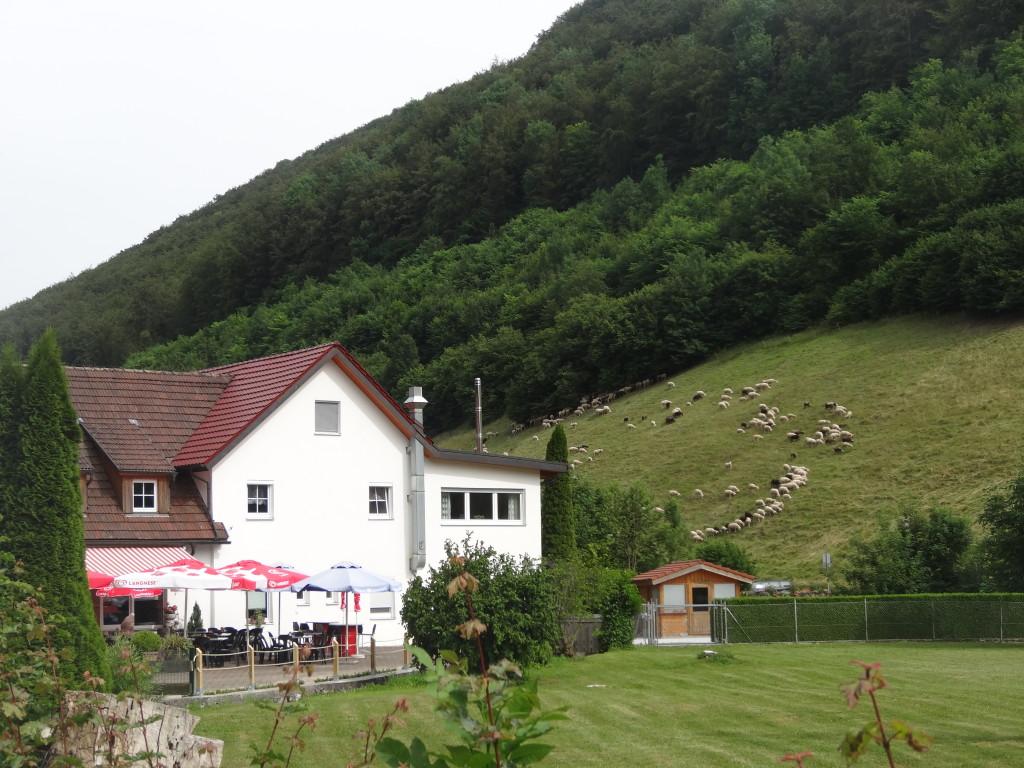Schafe am Hang und für den Radler wird gesorgt in Wiesensteig beim Gasthaus Filsquelle