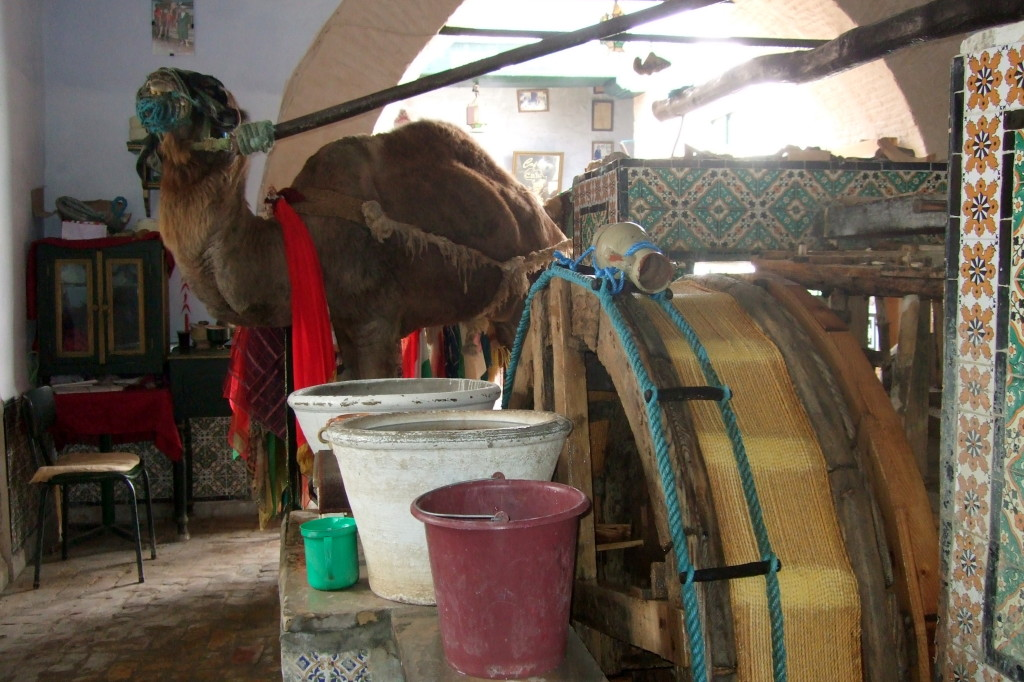 Das arme Tier schöpft heiliges Wasser