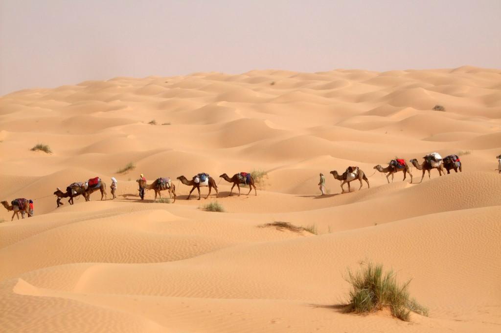 Unsere Karawane. Die Treiber führen die Tiere, wir sind irgendwo zu Fuß in den Dünen unterwegs und genießen die Stille und das Farbenspiel der Wüste