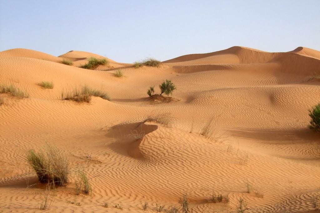 Und wieder die gemächliche Wanderung durch die Wüste.Morgens laufen, nachmittags reiten.