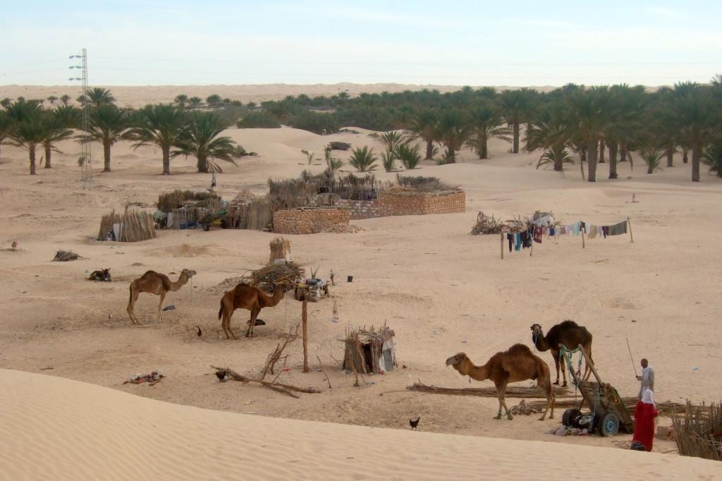 In der Oase lebt man in enger Gemeinschaft mit den Tieren und Palmen