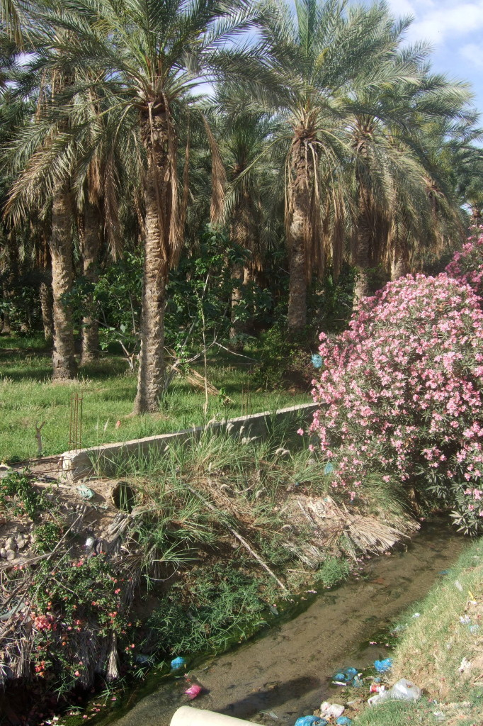 Morgenspaziergang in den Palmenheinen von Touzeur