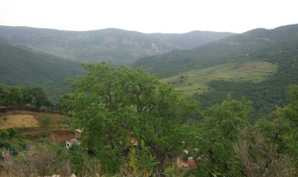 Von Ain Draham geht es kurvenreich hinab, durch Korkeichenwälder zum Meer