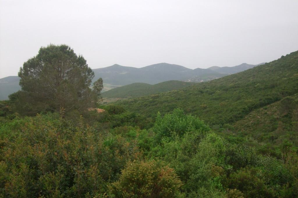 Die Gegend um Tabarka und weiterhin bis Bizerte ist überaus grün und fruchtbar.