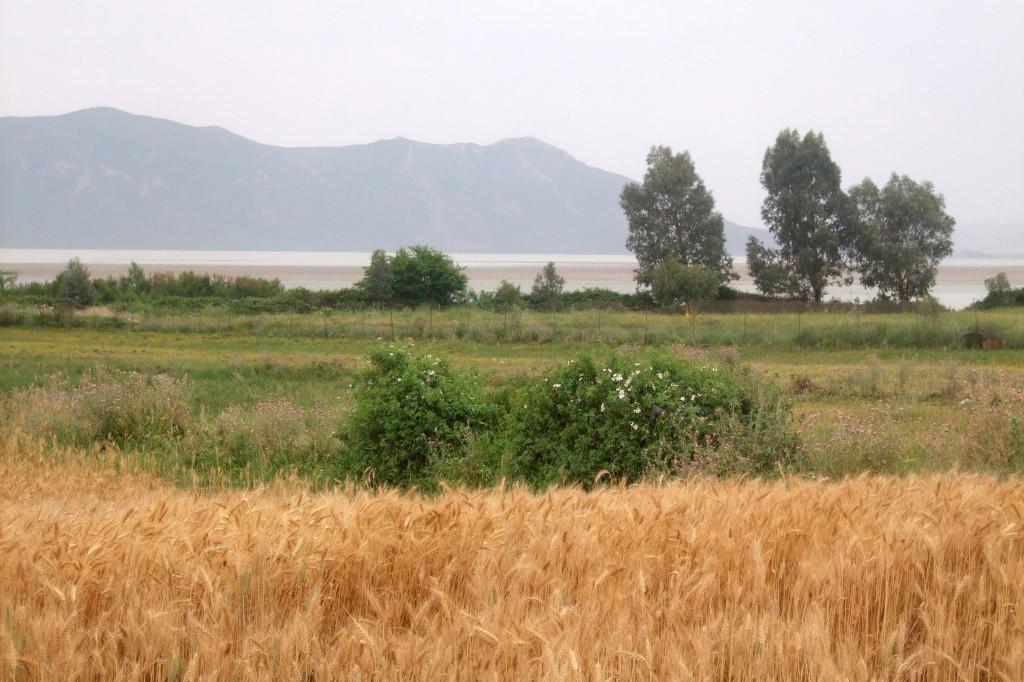 Lac und Djebel Ichkeul