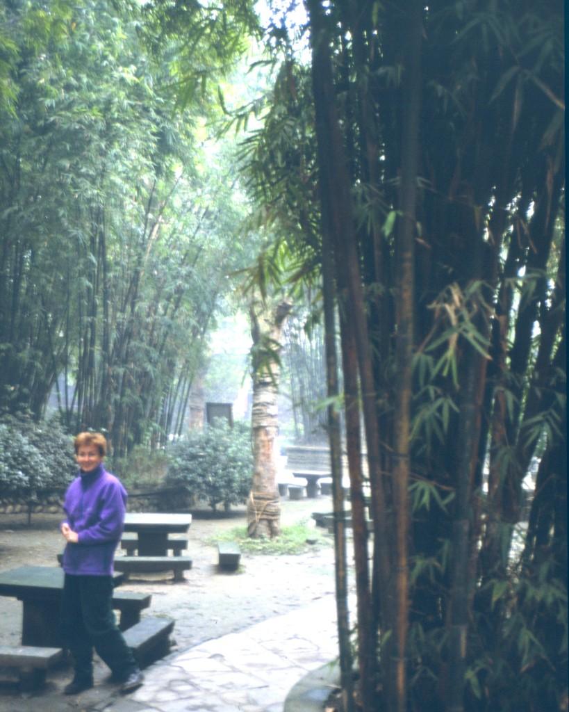 130 verschiedene Bambussorten wachsen im Park