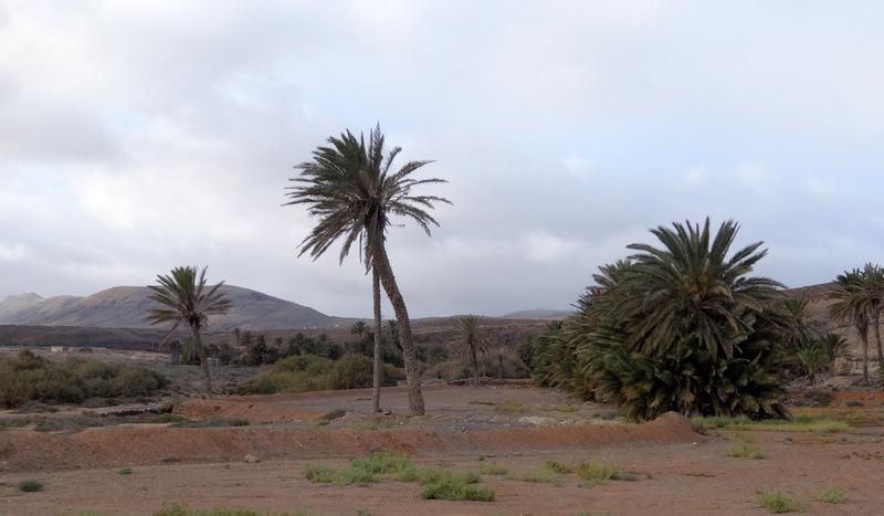 Das palmenbestandene Tal des Barranco de la Torre