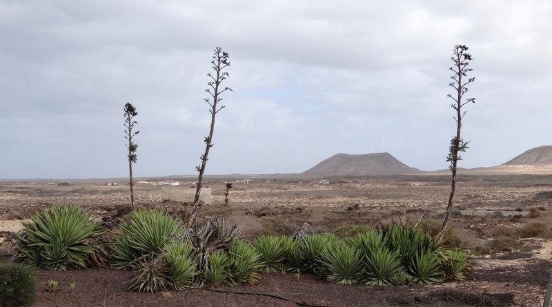 Agaven, Vulkane und Wüste ganz im Norden bei Majanicho