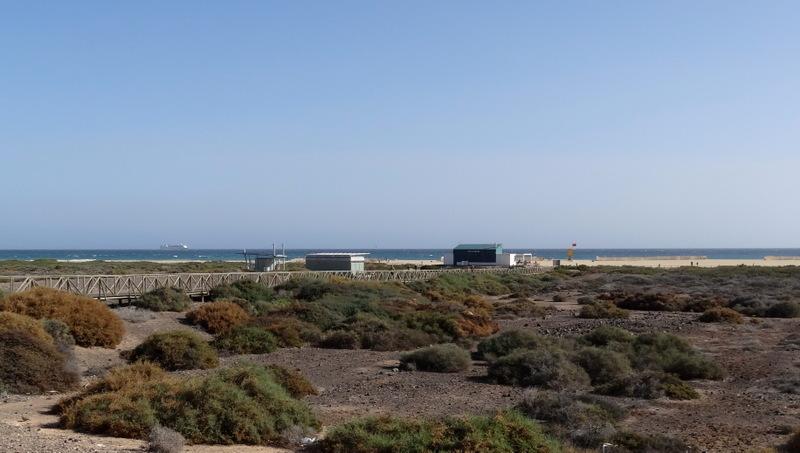 Zwischen Jandia Playa und dem Meer wachsen Salzwiesen