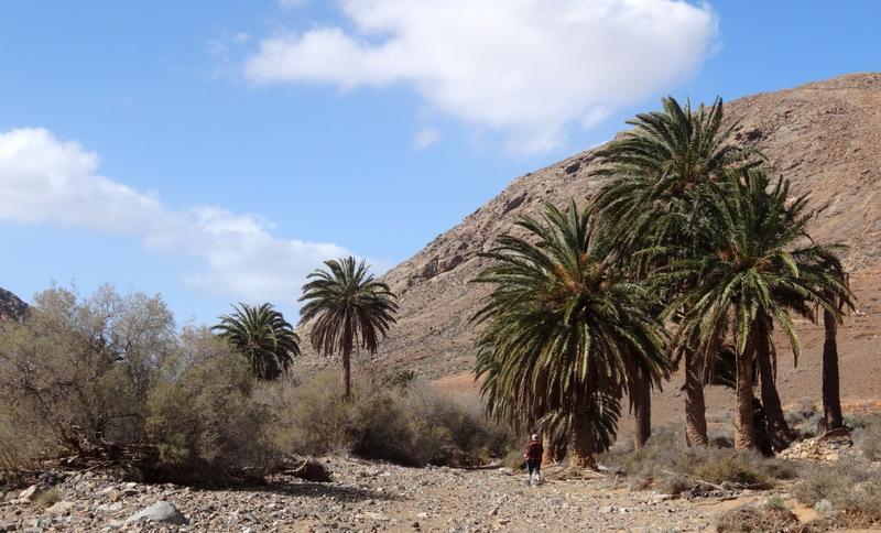 Beginn der Wanderung durch ein ausgetrocknetes, palmenbestandenes Flussbett