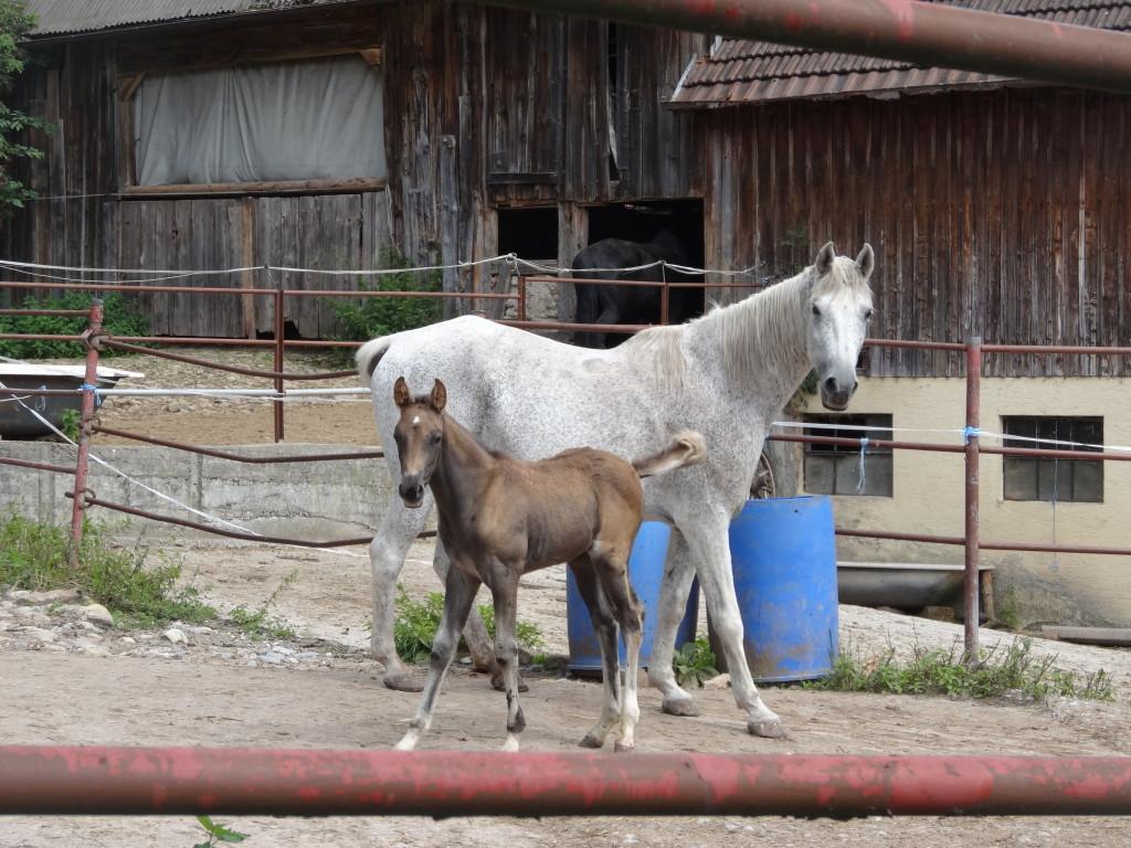 Eine alte Mühle dient heute als Pferdehof