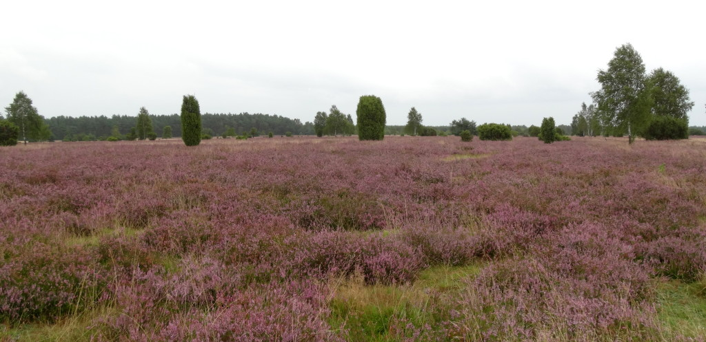 Wacholder Heide