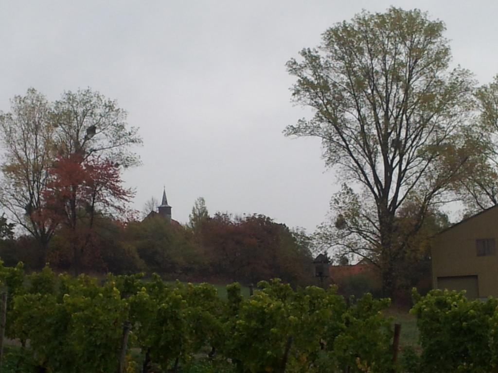 Schaffrichhof und Schönbühl