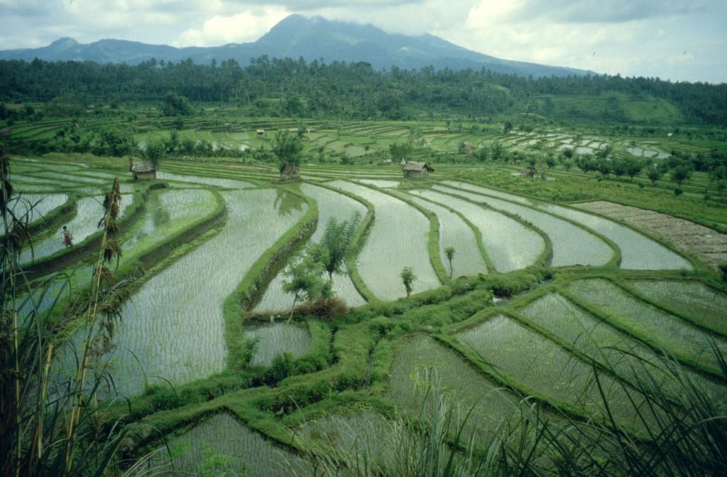 Bali02-2001-026
