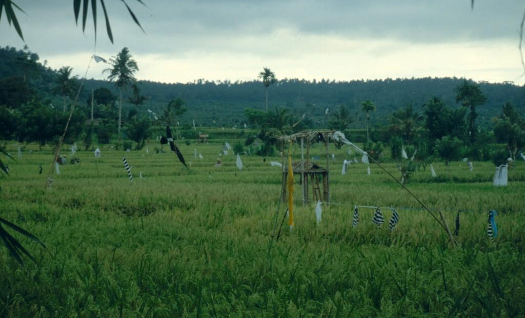 Bali02-2001-033